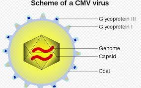 Cara Mengobati Virus CMV