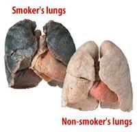 Cara Membersihkan Paru Paru Akibat Rokok